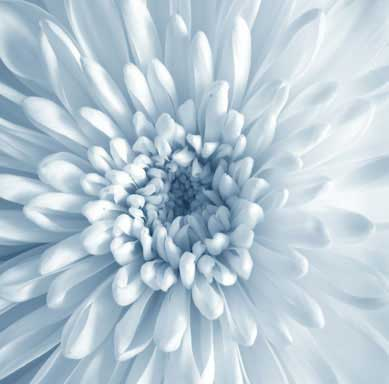 Image of a flower linking to Online Flower Orders